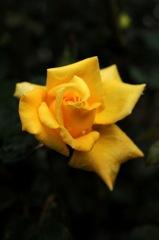 古都の秋麗花…7