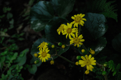 古刹の庭花…1