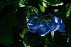 暦山の花模様…3