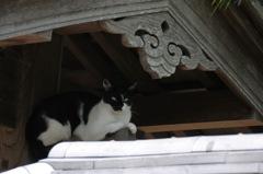 駆け込み寺の寺猫…