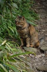 史跡に住む猫…1