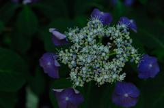 初夏の七変化…3