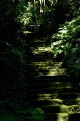 古寺の陰影…1