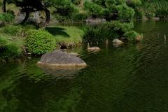 清澄庭園・大泉水の緑…