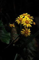 源氏山の秋花…