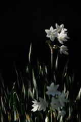 駆込み寺の冬花…2