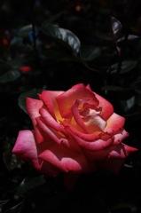春彩の麗花…4