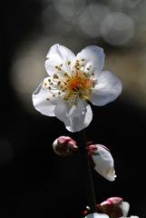 早春の八幡宮…5
