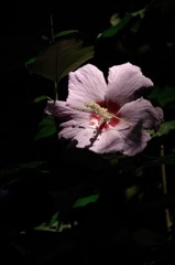夏日の淡色…1