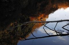 晩秋の鎌倉湖…2