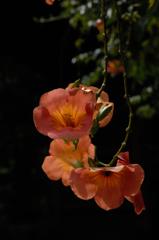 葉月の残花…1