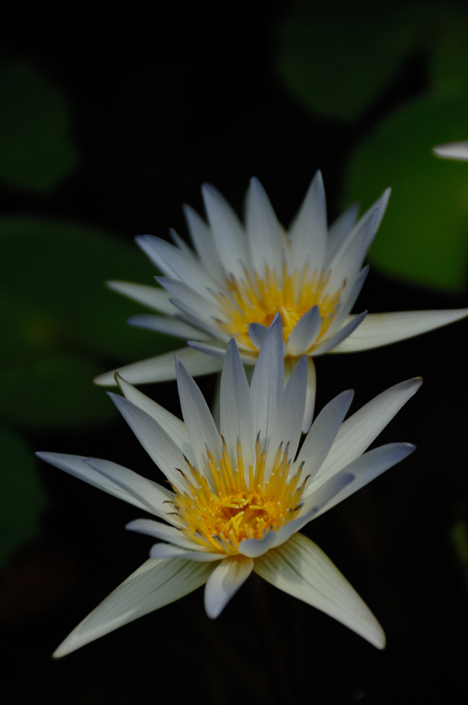 熱帯の妖花…5