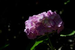 古都の色変花…10