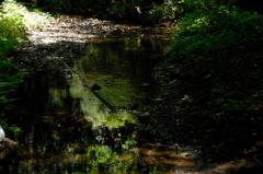 深緑の鎌倉湖…2