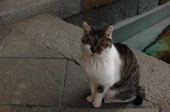 史跡に住む猫…2