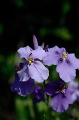 路傍の春花…2