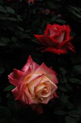 春彩の麗花…12