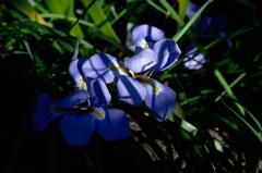 寺庭の冬花…2