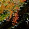 秋景の明月院…3