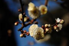 新春の彩り…7