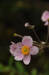 名刹の夏花…2