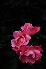 春彩の麗花…7