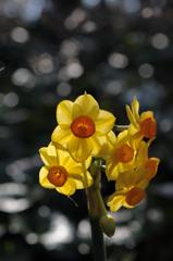 待春の小花…1