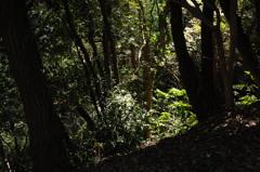 木漏れ日の陰影…1
