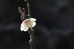 春香の白弁…2