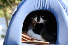 明月院の寺猫…1