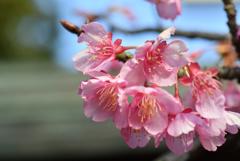 新春の彩り…3