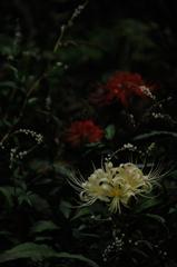 古刹の妖麗花…3