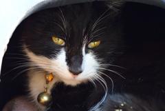 明月院の寺猫…2