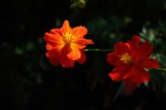 都心の赤橙色…2