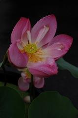雨中の仏花…