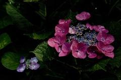 暦山の花模様…1