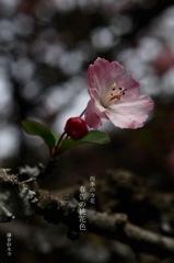 四季の寺花…3