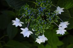 古都の七色花…7