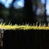 春陽の瞬き…2
