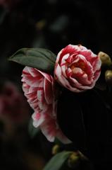 花寺の春装…2