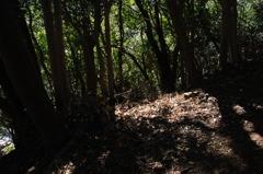 木漏れ日の陰影…4