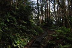 緑間の山道…