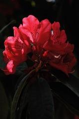 春陽の紅花…