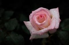 今春の花園…11