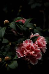 花寺の春装…1
