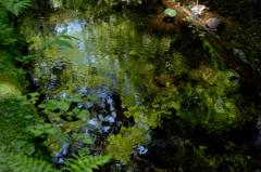 深緑の鎌倉湖…3