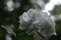 山中の白美…1
