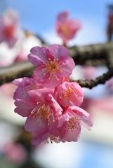 新春の彩り…1