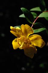 暦山の花模様…2