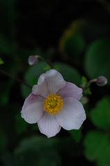 寺庭の秋花…1